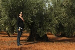viendo los olivos centenarios